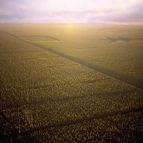 Kāingaroa Forest