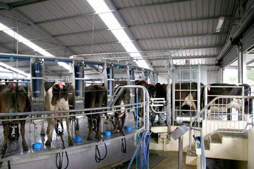 Rotary milking