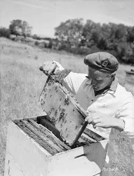 Ex-serviceman beekeeper