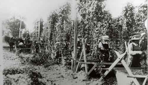 Hop picking, Heine family farm