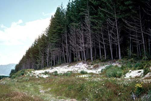 Kāingaroa State Forest