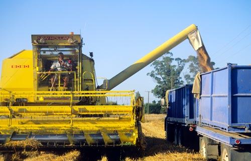 Header delivering grain to bulk trucks