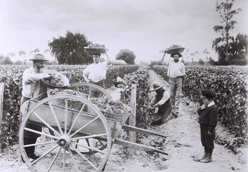 Marist brothers' vineyard