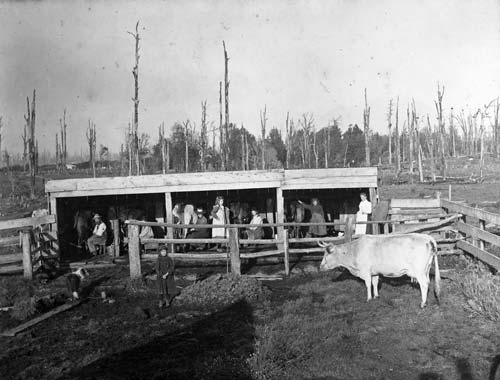 Milking before mechanisation