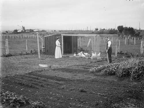 Rural vegetable garden