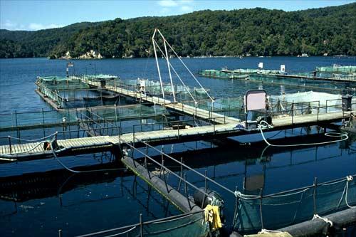 Big Glory Bay salmon farm