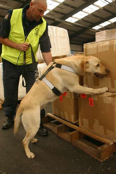 Drug dog at work