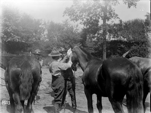 Horses and vets at war