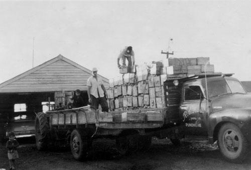 Loading Ravji Hari's vegetable truck, Pukekohe
