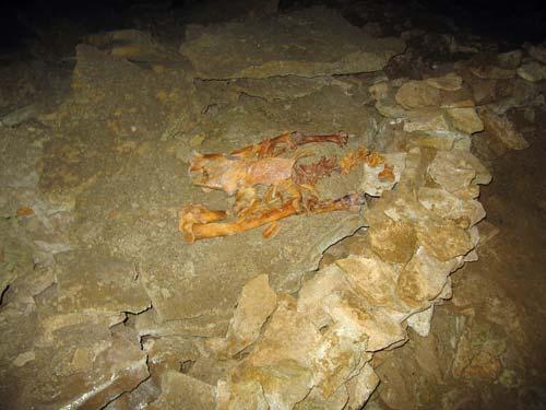 Bird skeleton, Ōpārara caves