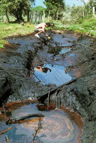 Kōtuku oil seep