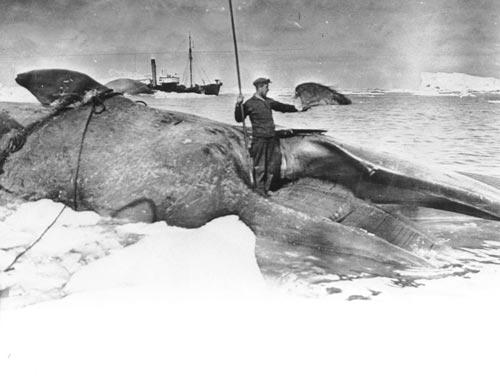 Norwegian whaler, Ross Sea, Antarctica