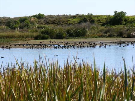 Matatā bird sanctuary