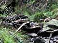 Habitat of Hochstetter's frog