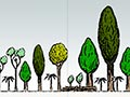 Stages of forest succession